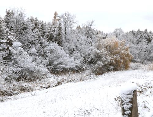 Onde mais neva no Canadá?