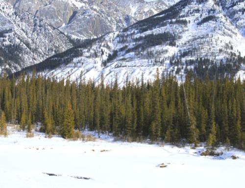 Parque Nacional Wapusk no Canadá
